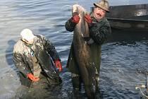 21. výlov Zboženského rybníka ve Zlíně lámal rekordy. Ve výlovu i prodeji ryb a také v návštěvnosti. Celkem vylovili rybáři 17 metráků ryb, 16 hned prodali.