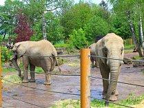 Sloninec ve zlínské zoo. Ilustrační foto