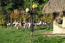 Zoologická zahrada Zlín - Lešná
