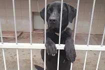 Deník na návštěvě v Útulku pro opuštěná zvířata v nouzi Zlín Vršava
