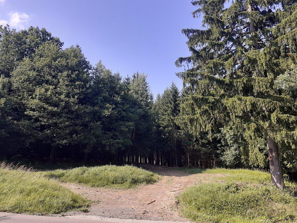 Lesy okolo obce Velíková: i sem houbaři rádi chodí.