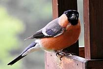 Pták. Ilustrační foto.