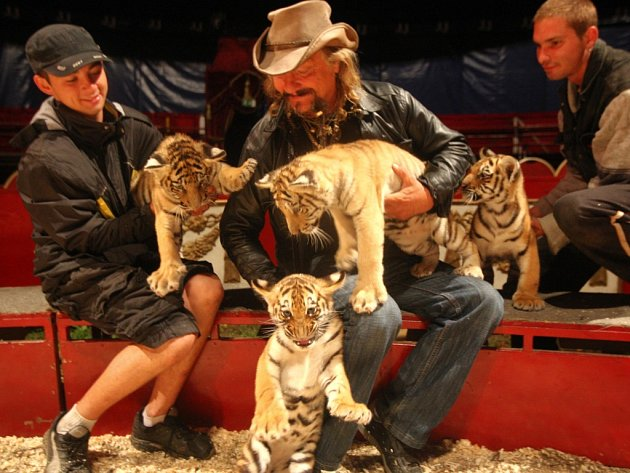 Mláďata tygrů v cirkuse Joo ve Zlíně.