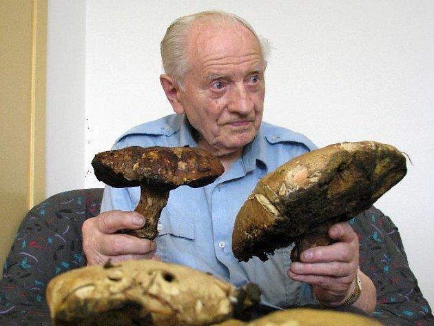 Hřib s průměrem klobouku velikosti talíře našel tento týden houbař Zdeněk Jirousek ze Zlína.