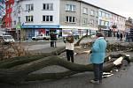 Pád stromu ve Zlíně - soudní znalec z oboru dendrologie Pavel Šimek (vlevo).