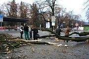 Zatupitelstvo uctilo minutou ticha oběti pádu stromu.
