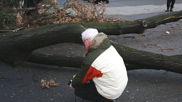 Pád stromu ve Zlíně - soudní znalec z oboru dendrologie Pavel Šimek.