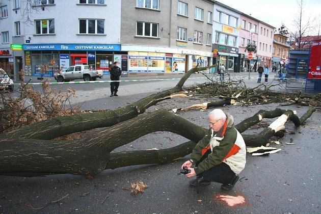 Pád stromu ve Zlíně těžce zranil 6 lidí