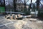 Pád stromu ve Zlíně - vyšetřování.