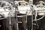 PETRŮVKA, ROK 1975. Na snímku z 50. let M. Sviták a M. Slováková, mládenci a děvčata s ozdobenými kosami. Dívky pekly dorty a vdolečky. Slavnostní průvod procházel vyzdobenou obcí za doprovodu muziky.