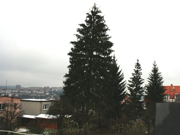 Budoucí zlínský vánoční strom