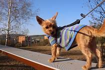 """Zanedlouho otevřou na Jižních svazích ve Zlíně nové hřiště pro psy.  """"Kontrolní den"""" provedli redakční psi Zlínského deníku Čezík a Arielka."""