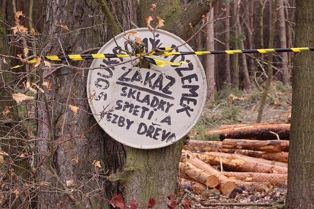 Část lesa ve Velikové, kterou jeho majitel těží.