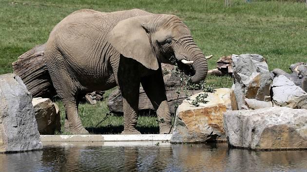 Sloní výběh v Zoo Zlín. Ilustrační foto