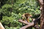 Ve zlínské zoo pokřtili Dana Morávková a Roman Vojtek mláďata kotulů veverovitých. Dostali jméno Kája a Míša.