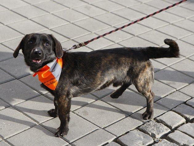 Vodítko je samozřejmostí, venčíte-li psa ve městě.