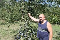V Bohuslavicích u Zlína zloději ukradli víc jak tunu trnek. Martin Drábek už nechal sad hlídat.