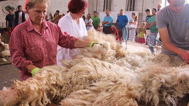 Selský den a mistrovství ČR ve stříhání ovcí ve Vrběticích