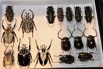 Entomologický výměnný den a výstava.