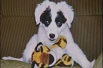 Šestiletý kříženec Filip byl mazlíčkem celé rodiny. Snímek ukazuje Filípka v době, kdy byl štěně.