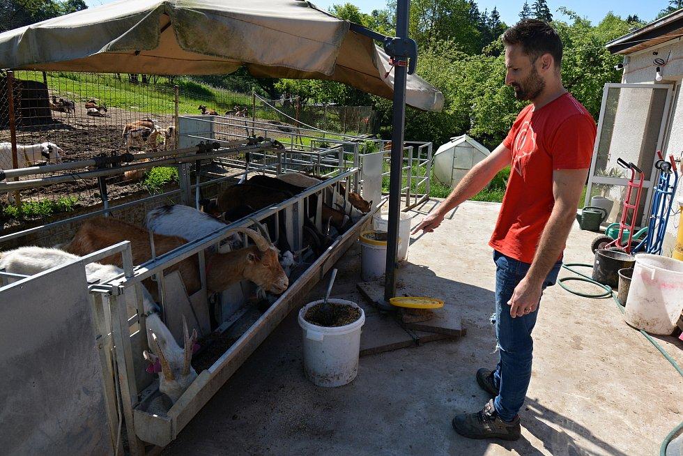 Kozí farma ve Vizovicích 3. června 2021. Po pandemii zápasí s financemi, chybí na žrádlo, kterého stohlavé stádo spořádá téměř 5 tun za měsíc. Majitel Martin Vlček.