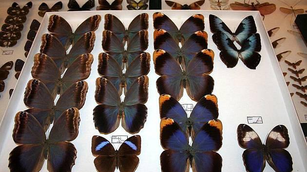 Entomologická výstava.
