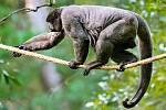 Kolekci chovaných zvířat ve zlínské zoo rozšířil mimořádný nový druh. Z rakouské Zahrada získala dva samce vzácných chápanů vlnatých.
