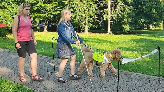 Cvičitelka Lenka Vaňková kontroluje trasu. Pes ale vede perfektně