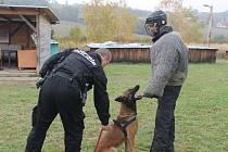Útvar kynologické služby městské policie ve Zlíně-figurant se psem Cairo