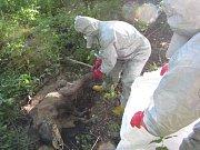 Uhynulí divočáci na Zlínsku - zásah hasičů