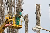 Zimní ořez vzrostlých dřevin v Otrokovicích.