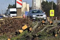 Kvůli rozšiřování silnice I/49 ve Zlíně – Malenovicích muselo jít k zemi opět nekolik vzrostlých stromů.