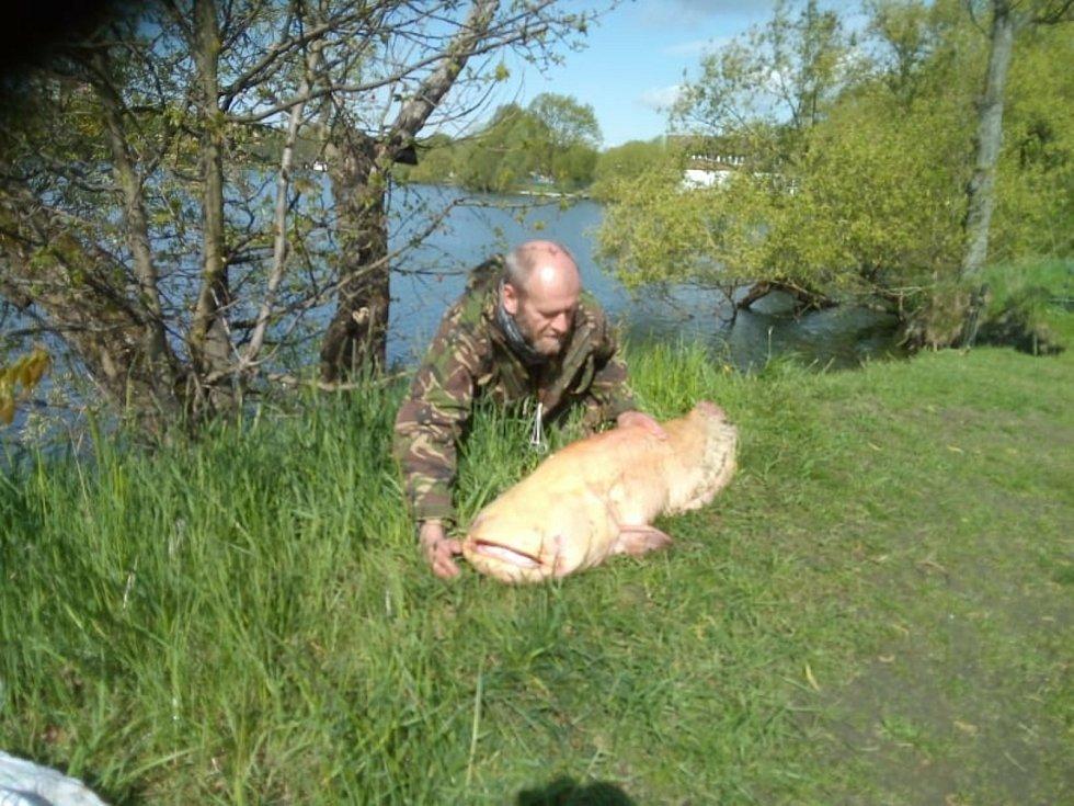 Otrokovický rybář David Kruml si první květnový čtvrtek připsal na tamním Štěrkovišti svůj životní úlovek - sumce albína o délce 188 centimetrů.
