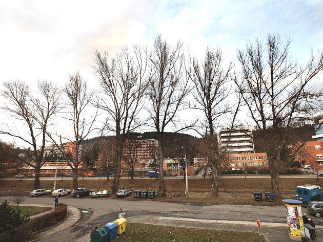 Vzrostlé topoly na Dřevnické ulici.
