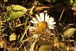 Čtenáři fotografují jaro