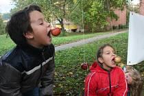 Zlínské Ekocentrum Čtyřlístek uspořádalo v neděli 9. října ve zlínské části Obeciny tradiční Jablečnou neděli. Lidé si mohli domů odnést jak čerstvě vylisovaný mošt, tak ochutnat i výrobky z jablek. Děti zase soutěžily na jablečné téma.