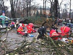 Tragédie ve Zlíně - spadlý strom zranil sedm lidí, včetně dvou dětí.