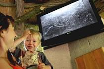 Ve zlínské zoo se narodili malí tygři, návštěvníci je však zatím uvidí jen na obrazovce.