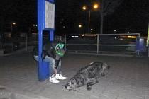 Opilý mladík si ustlal v zastávkovém označníku. Jeho pes pokojně čekal, až se majitel probere z alkoholového opojení.