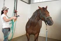 Sprchování v horku s radostí přijmou i koně.