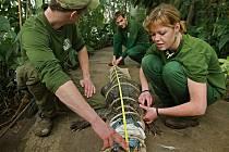 Aligátora amerického přestěhovali ve čtvrtek 15. prosince zaměstnanci zlínské zoo v Lešné z terária do tropického apvilonu Yukatán
