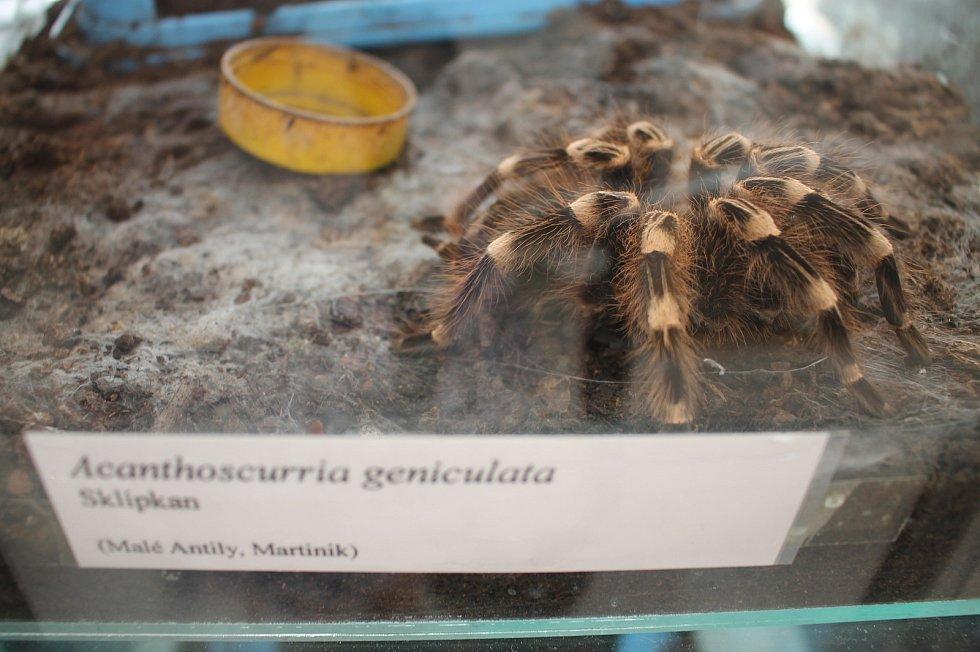 Výstava terarijních zvířat.