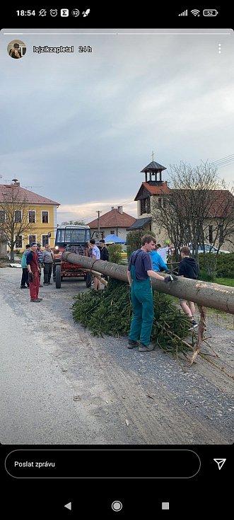 Letošní májka v Provodově měří okolo třiceti metrů.