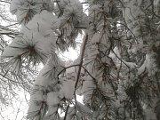 Zlín zasypal sníh