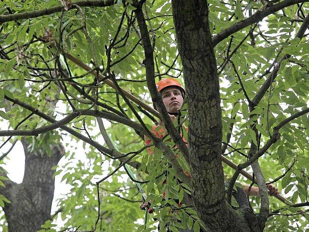 Jarní ošetřování městských stromů pokračuje. Ilustrační foto