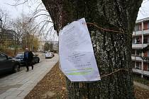 Stromy v ulici Družstevní na sídlišti Jižní svahy s výzvou k petici proti jejich kácení.