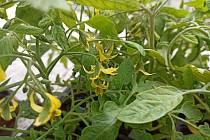 Že by pandemie nasměrovala maminky k zahradničení?