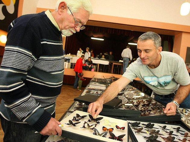 Entomologický výměnný den a výstava v Napajedlech