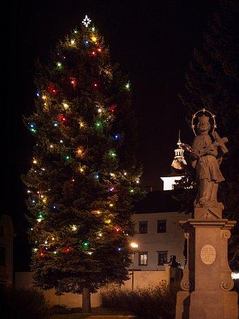 Kelč - Více než třicet pět let starý stříbrný smrk se také letos promění ve vánoční strom. Dvacet metrů vysoký strom je zasazený na náměstí mezi radnicí a zámkem.