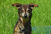 Rožnov pod Radhoštěm: Vojtíšek je přibližně 11 let starý pes , zřejmě se jedná o křížence jezevčíka. Je hladkosrstý. Vojta je přátelský, hodný, hravý pes a má  hygienické návyky